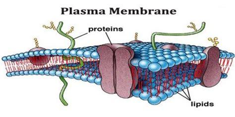 Thesis of plasma physics